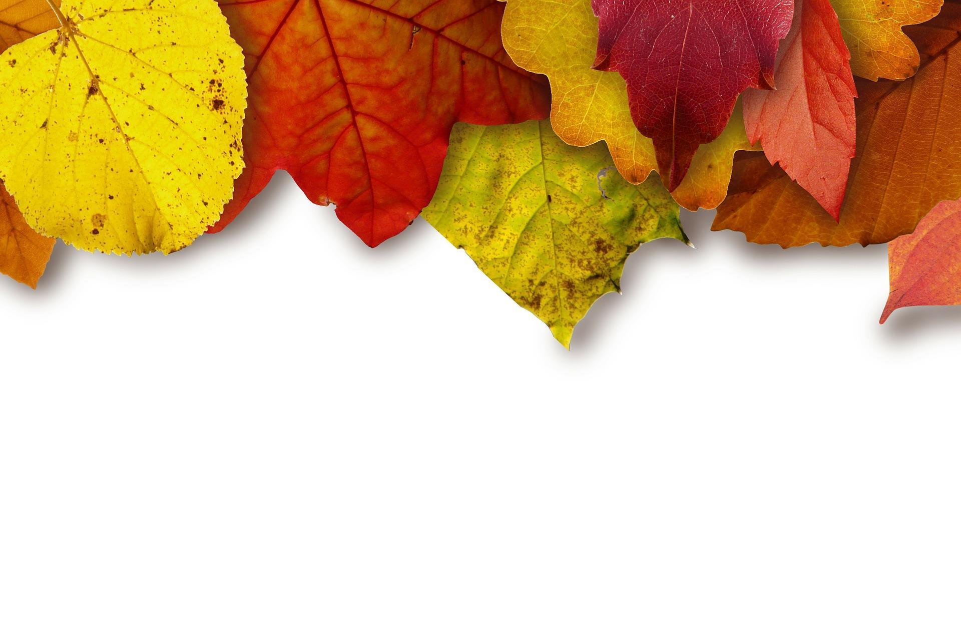 automne-montages-photos-avec-des-feuilles_2