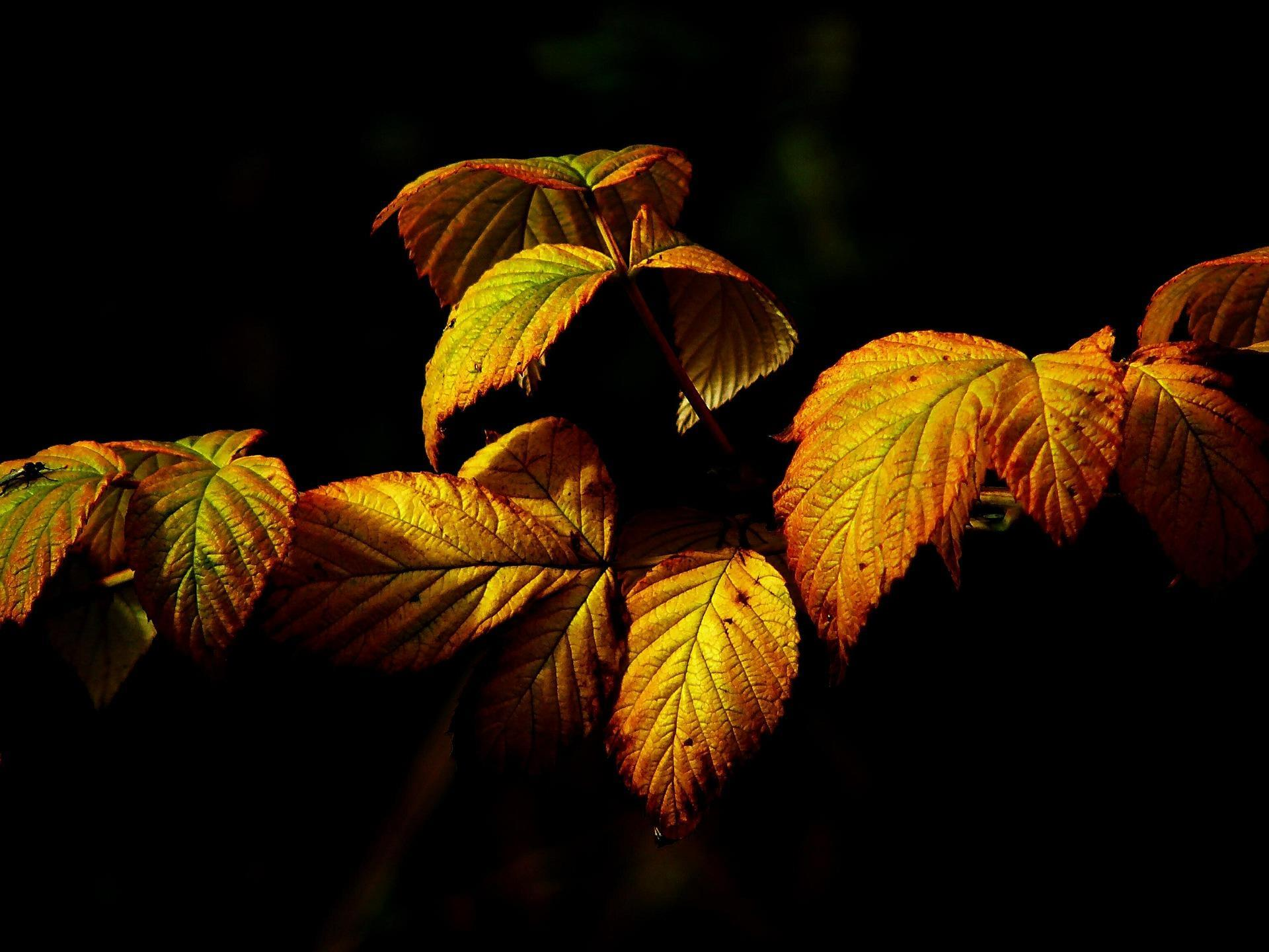 feuilles-automne_wallpapers-free_1