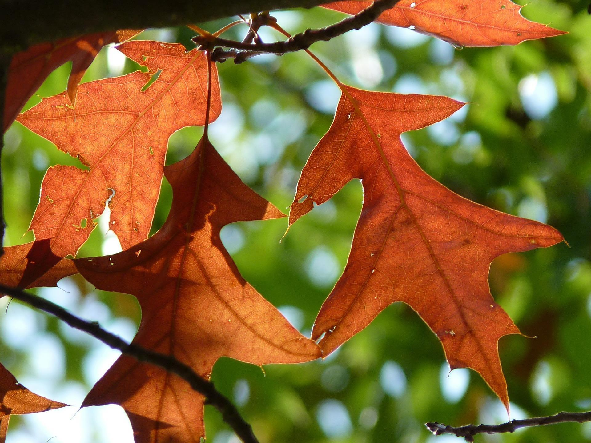 feuilles-automne_wallpapers-free_2