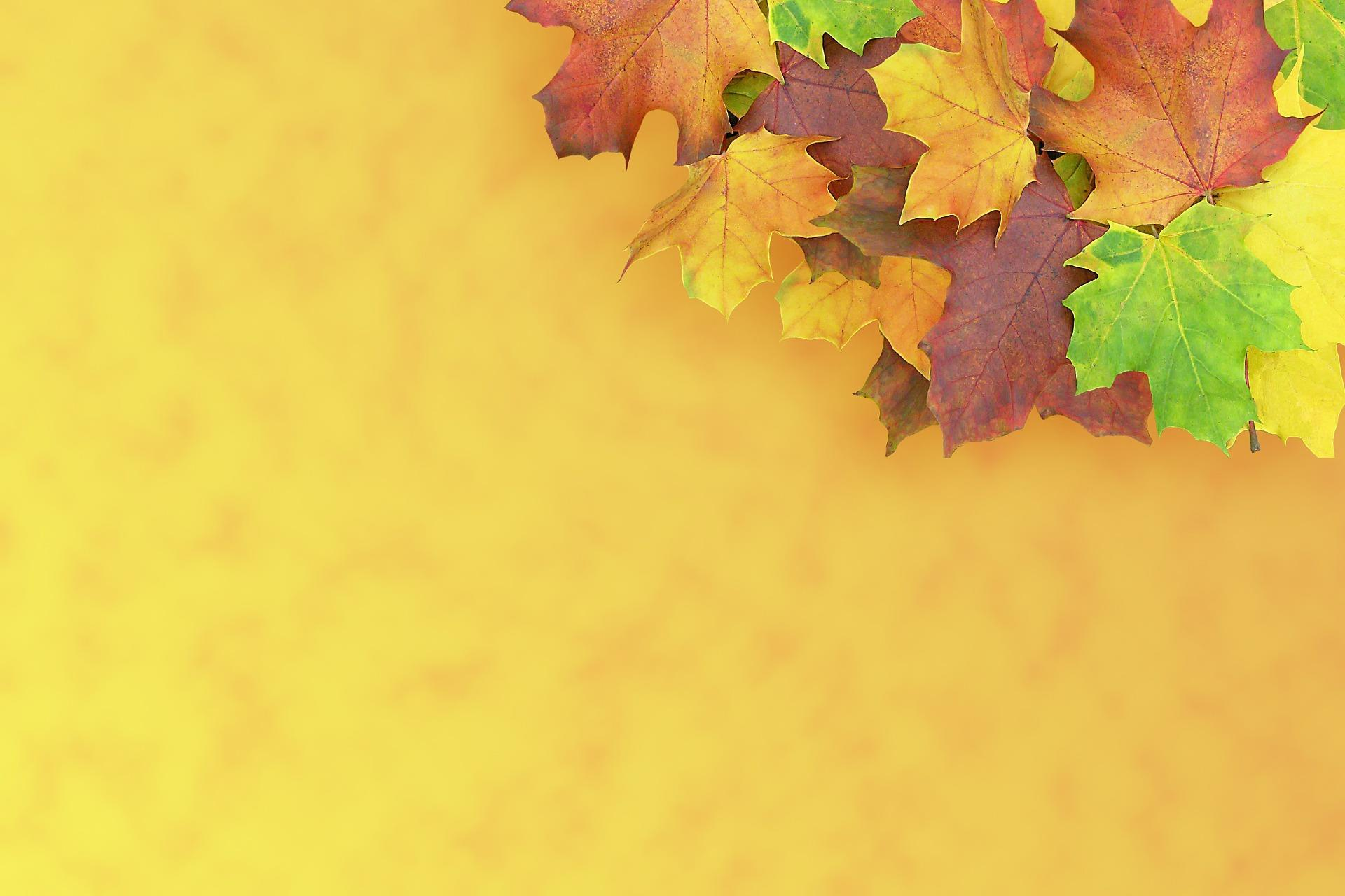 feuilles-automne_wallpapers-free_4