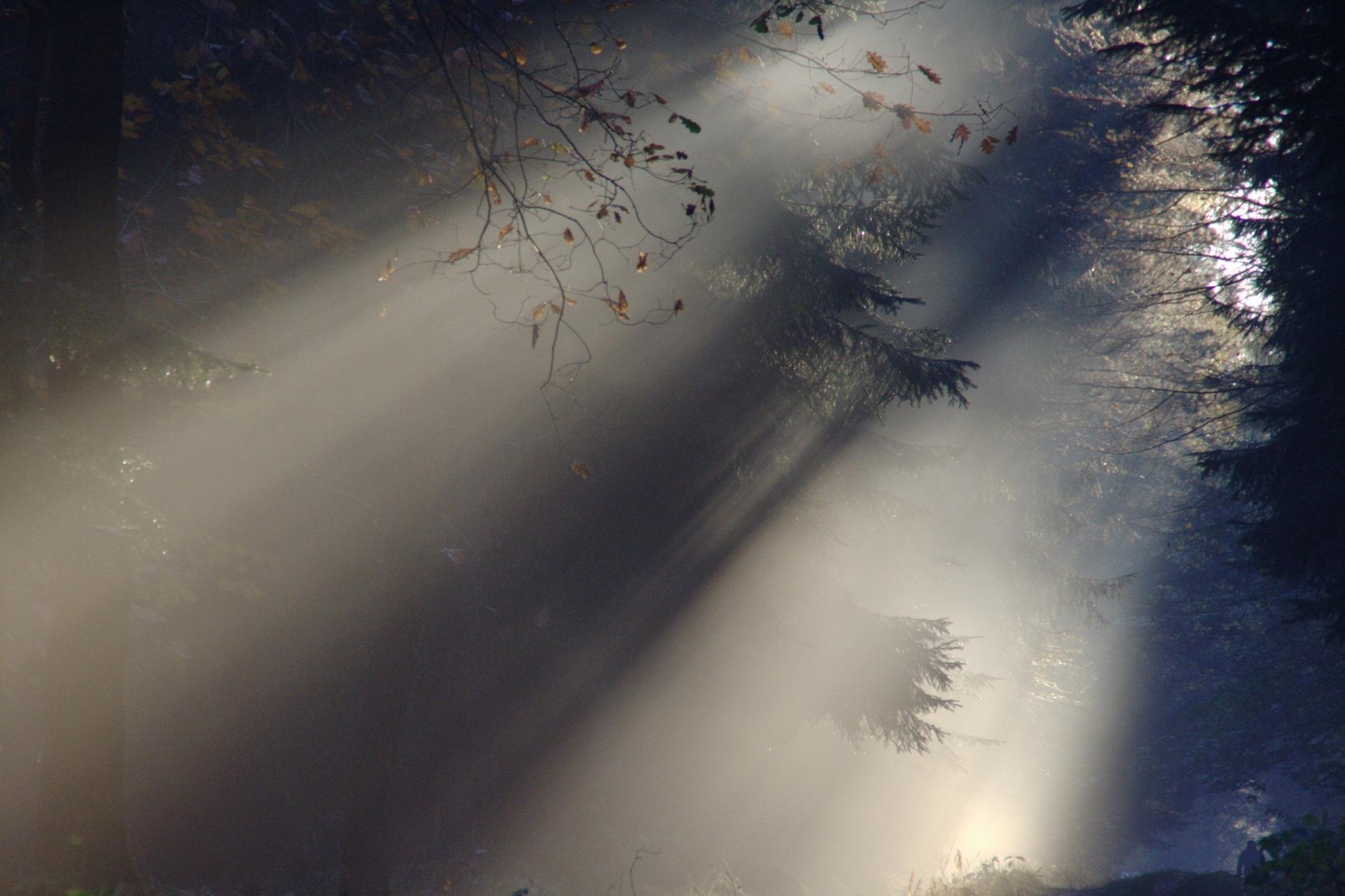 fond-ecran-automne_lumiere