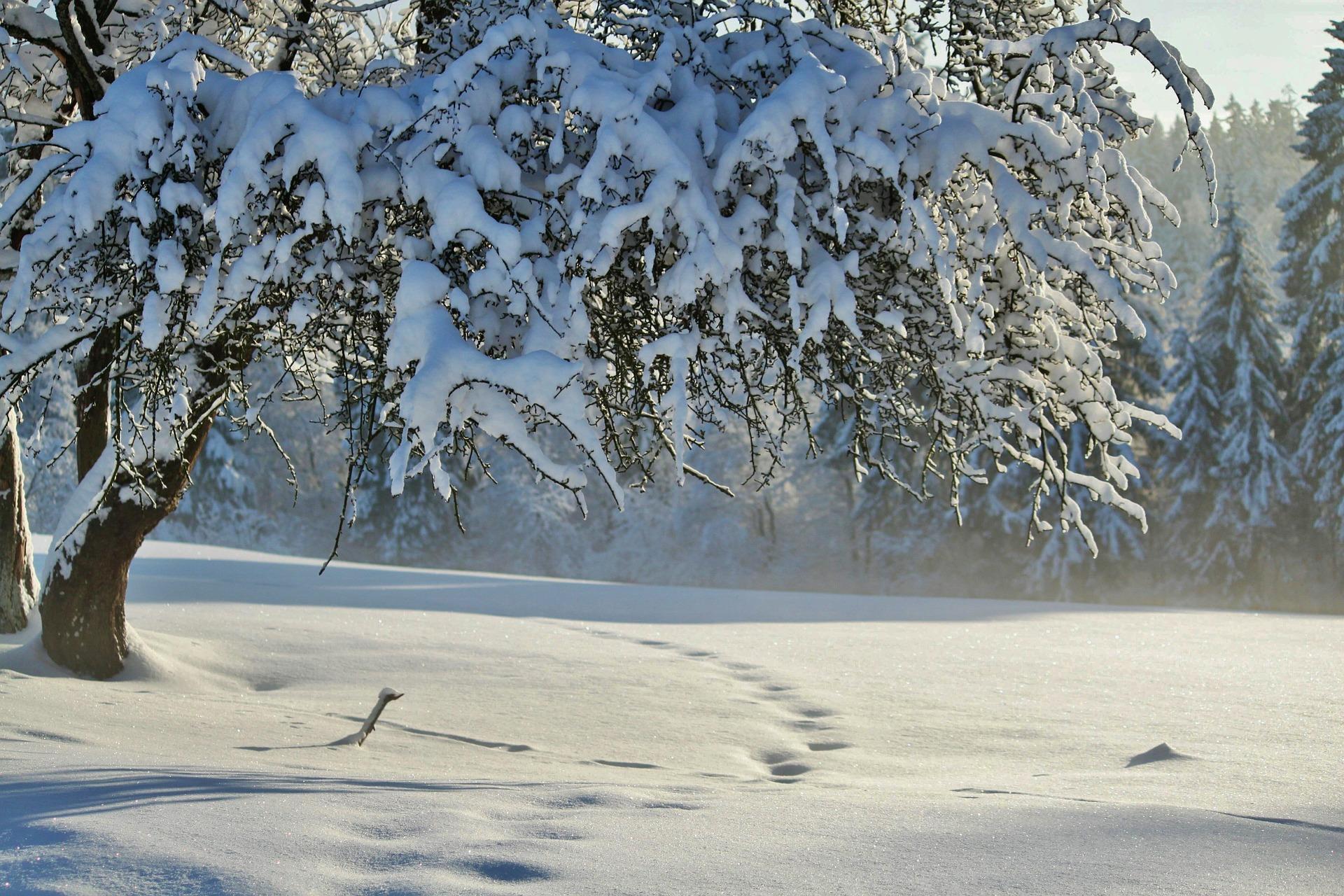 hiver-en-fond-d-ecran_free-download-pictures_arbre