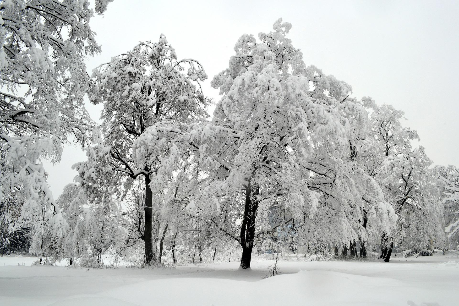photos-hiver-HD_widescreen_wallaper-to-download_trees