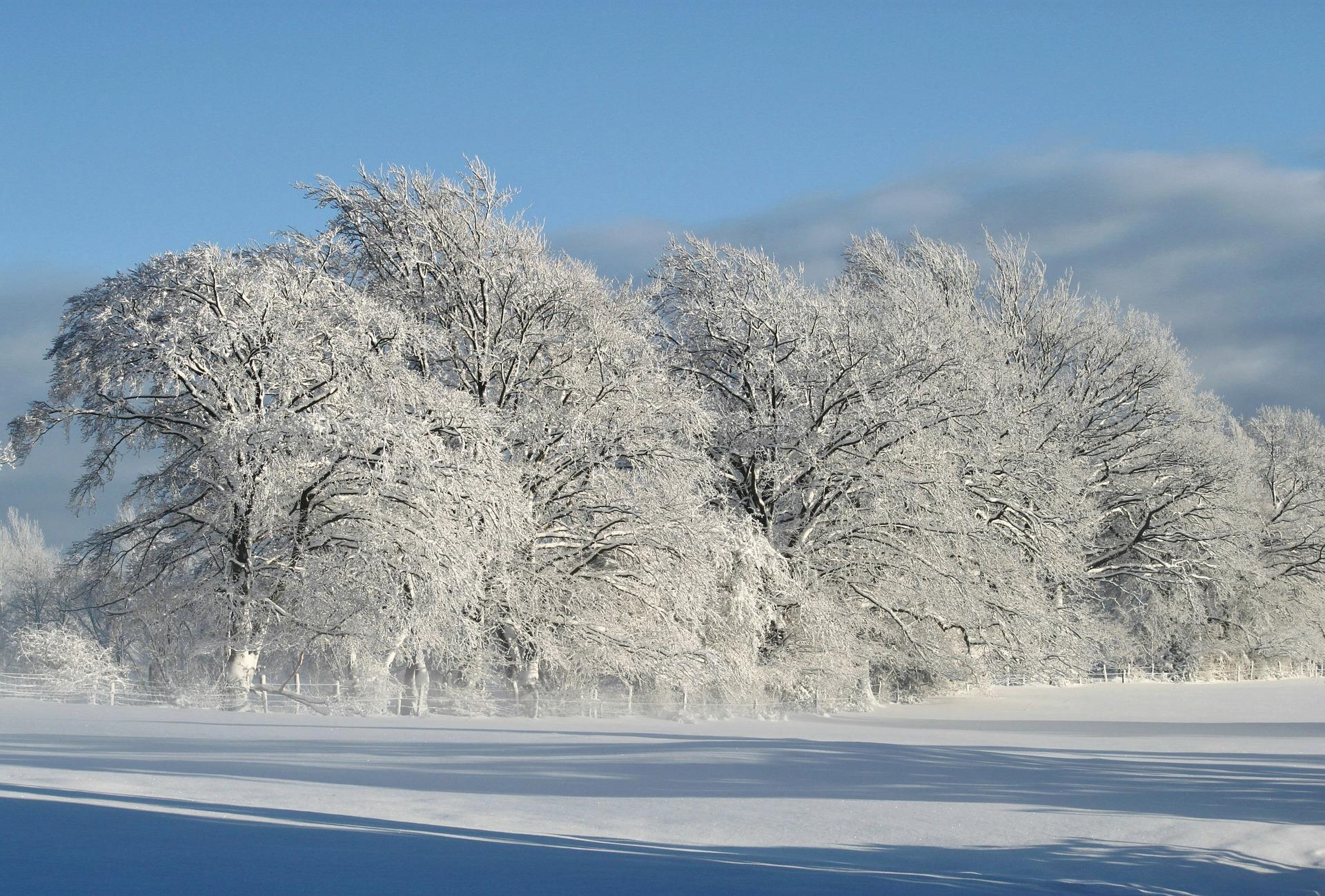 telecharger-image-image-hiver-grand-format_arbres