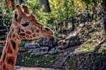 photographie-safari-animaux-afrique-en-grand-format_1