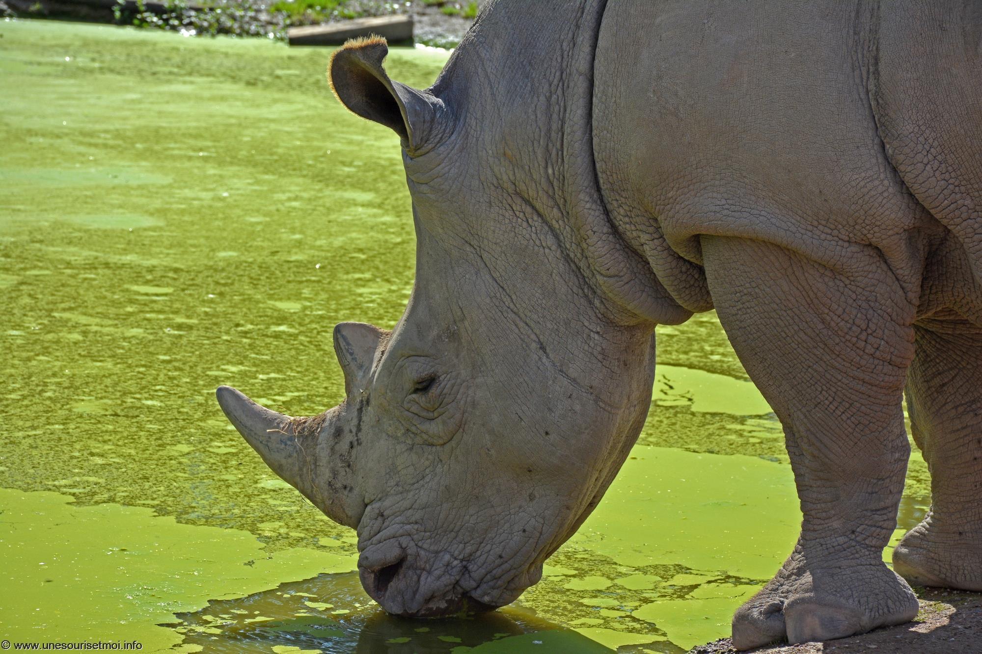 photographie-safari-animaux-afrique-en-grand-format_2
