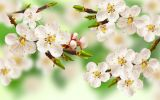 HQ-fleurs-et-nature-desktop-wallpapers-free-to-download_3