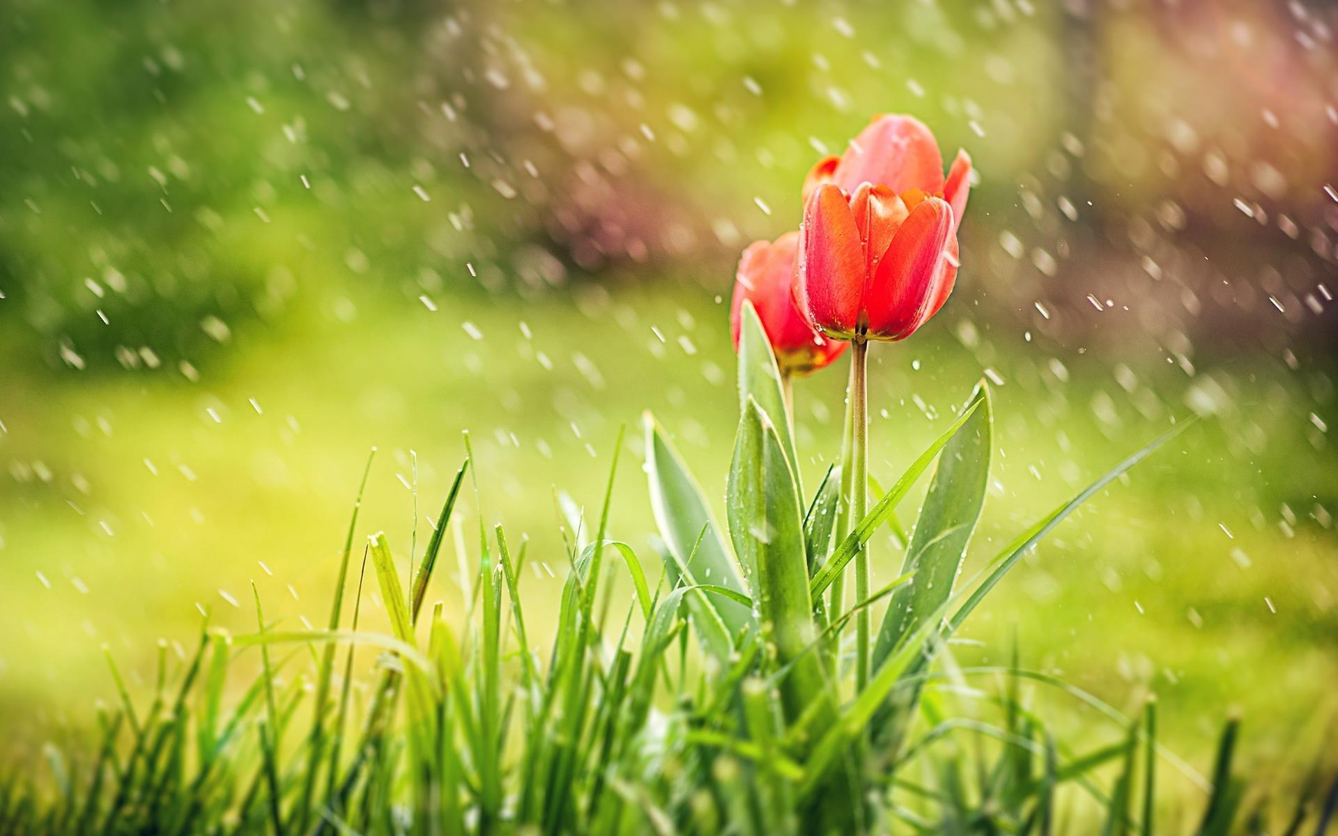 comment-trouver-des-fleurs-gratuites-pour-mon-ordinateur_3