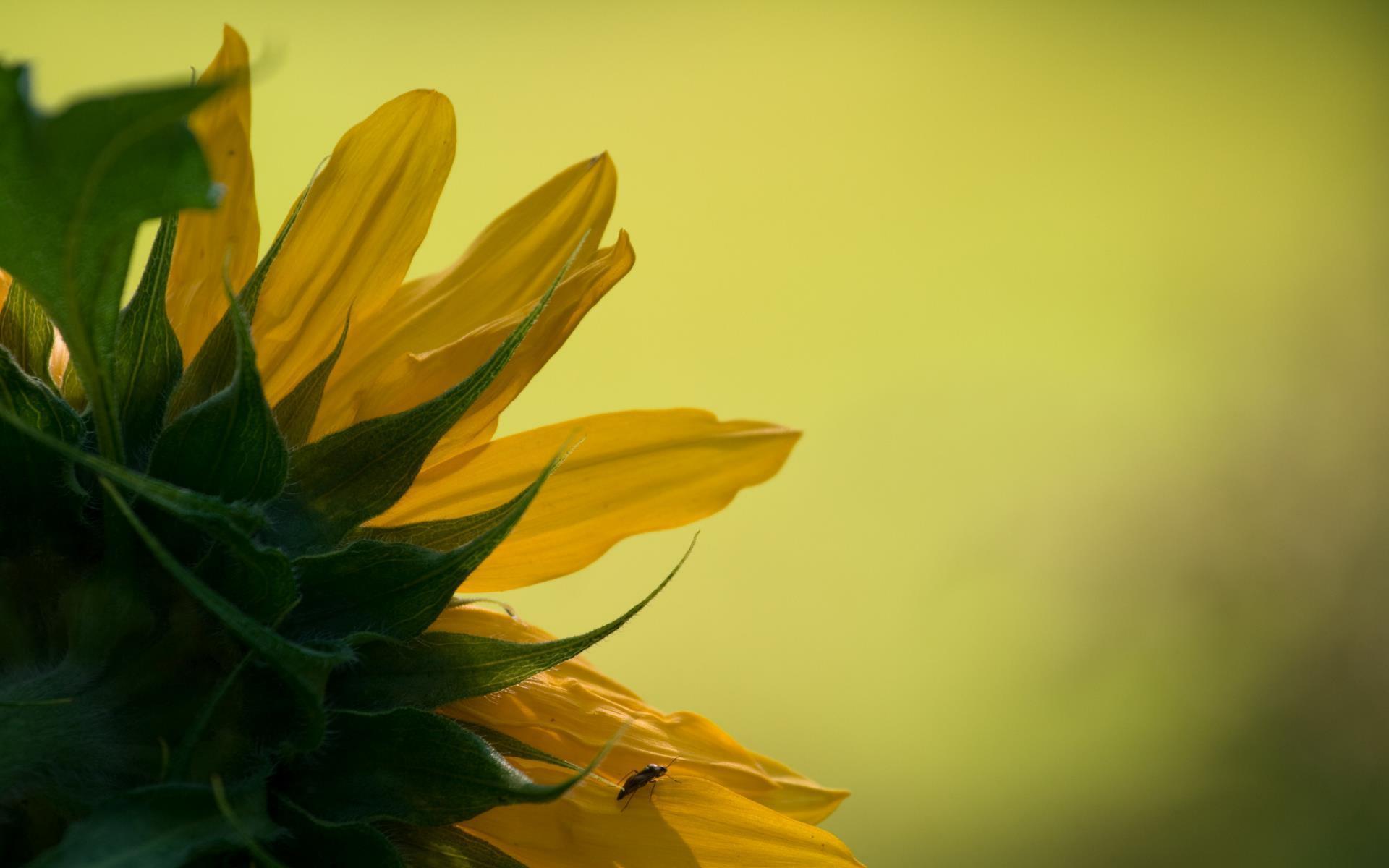fleurs-en-fonds-ecran-HD-a-telecharger-gratuitement_1