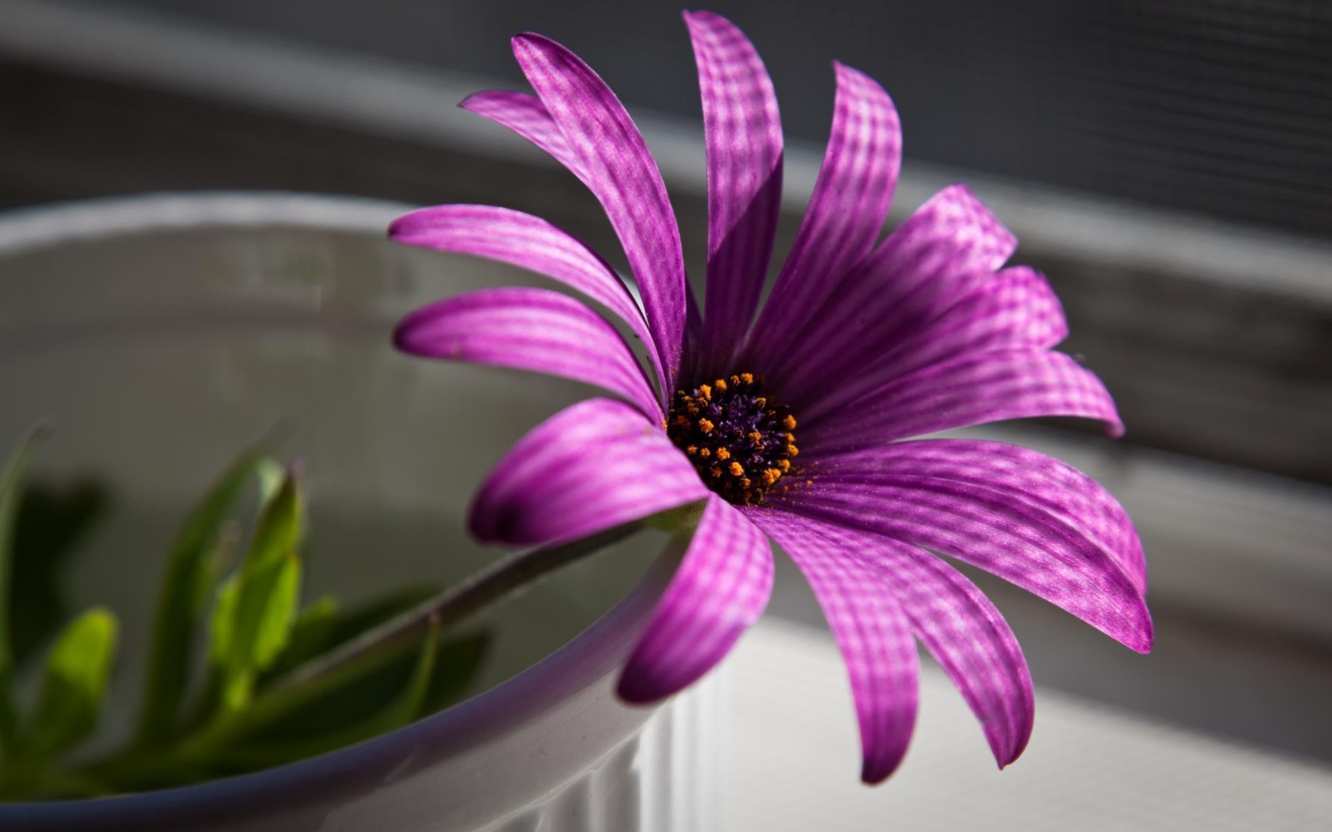 fleurs-en-fonds-ecran-HD-a-telecharger-gratuitement_2