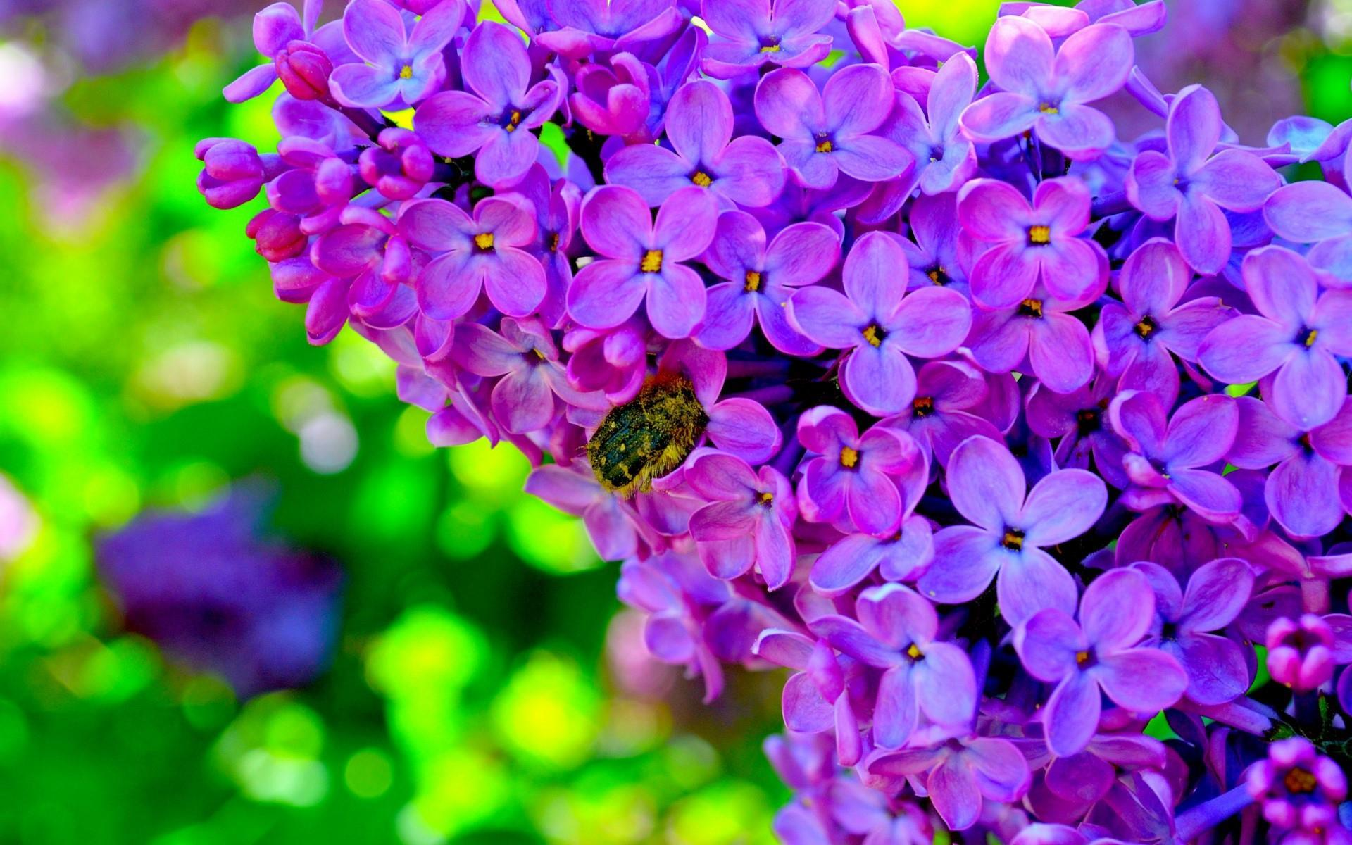 fleurs-en-fonds-ecran-HD-a-telecharger-gratuitement_4