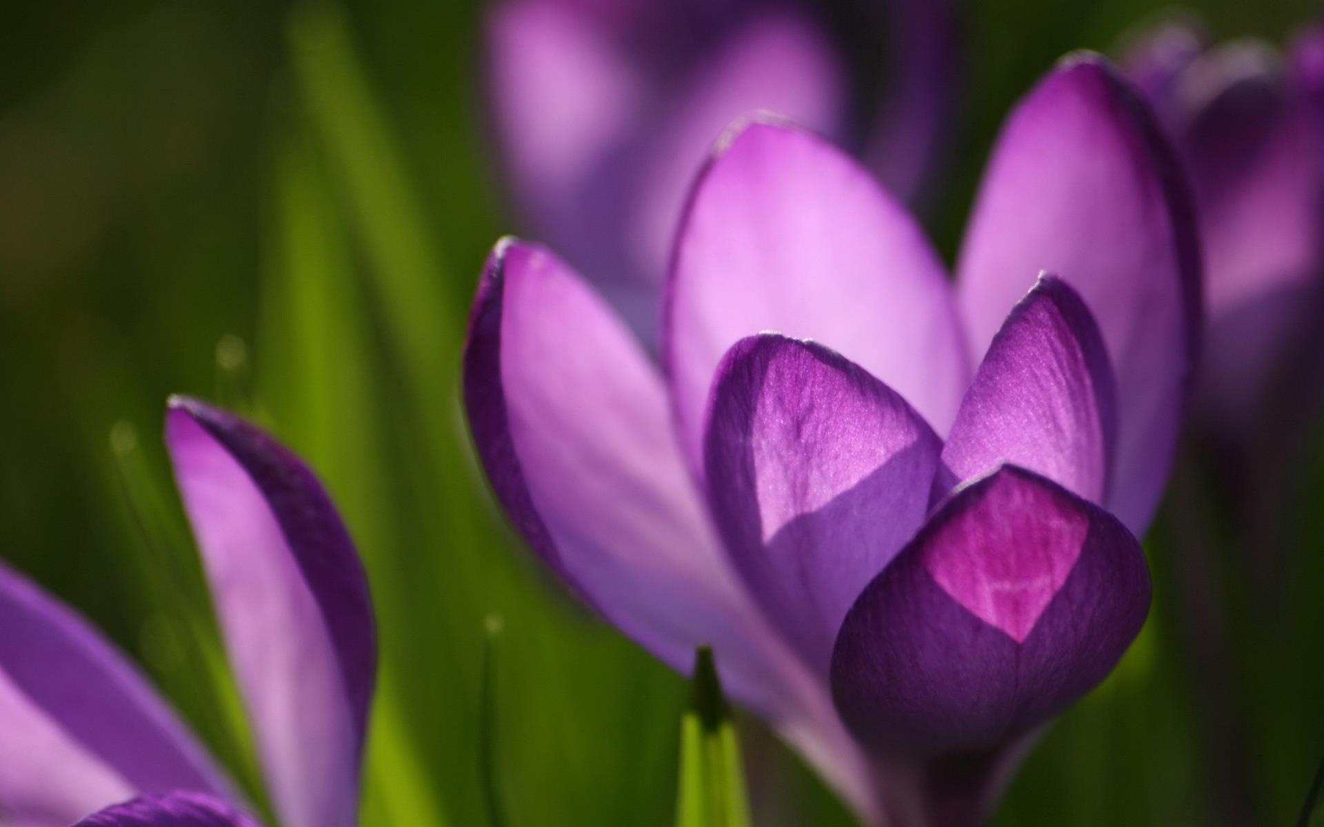 fonds-ecran-nature-et-fleurs-en-grand-format_1