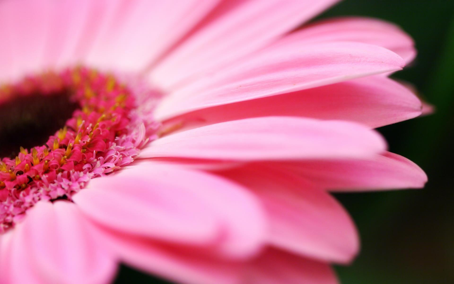 fonds-ecran-nature-et-fleurs-en-grand-format_2