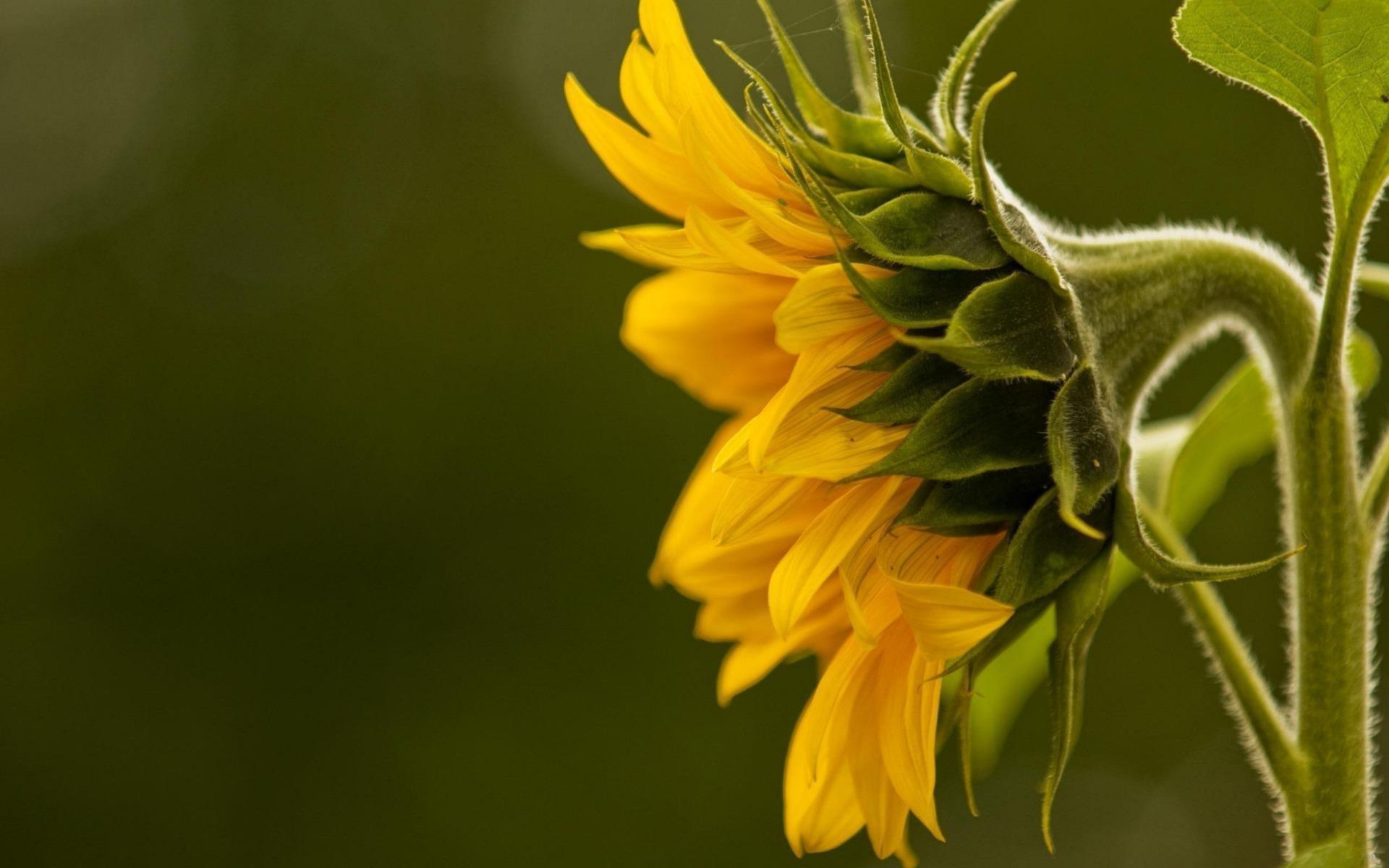 fonds-ecran-nature-et-fleurs-en-grand-format_3