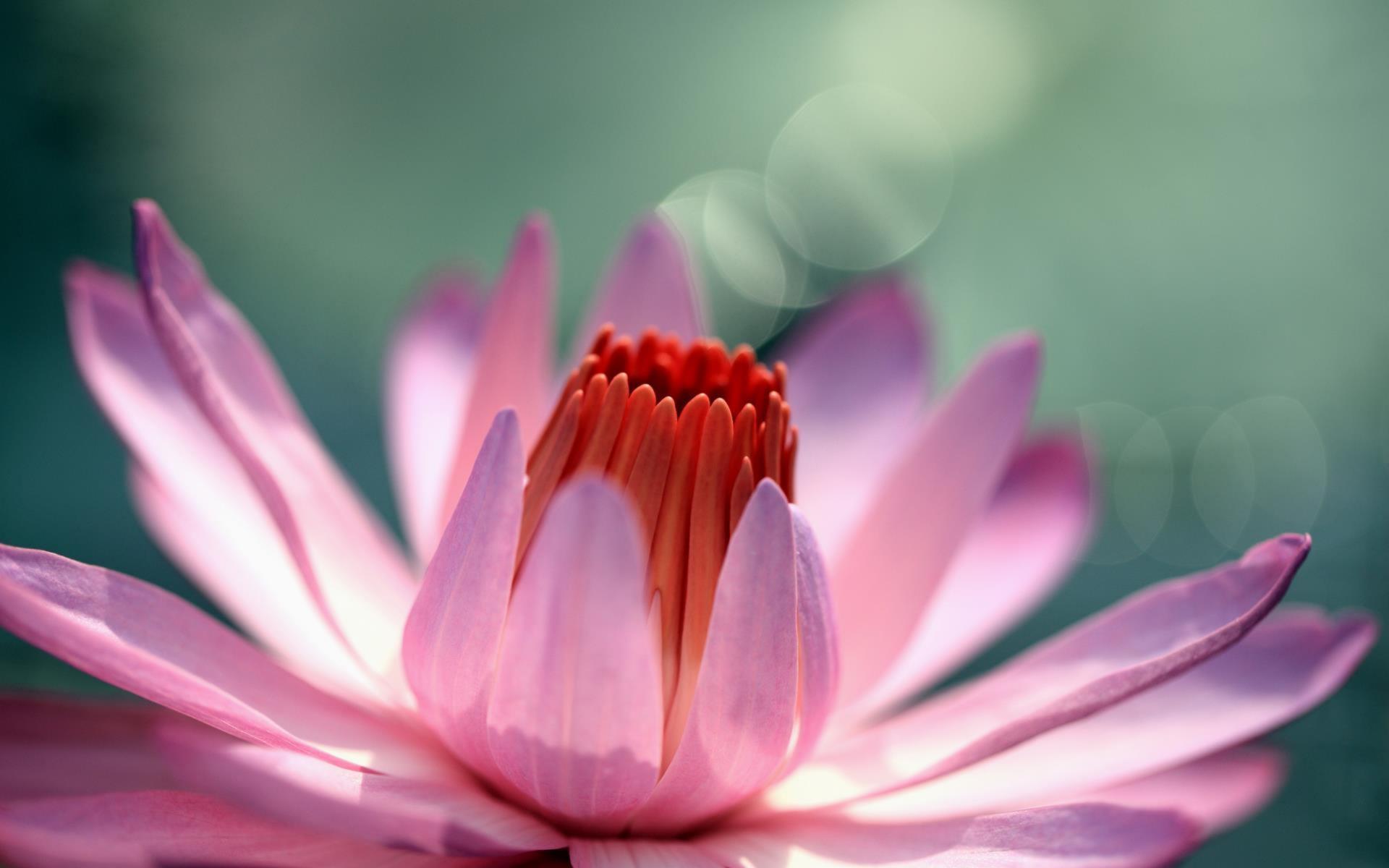 fonds-ecran-nature-et-fleurs-en-grand-format_4