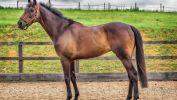le-monde-des-chevaux_nature