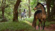le-monde-des-chevaux_poursuite