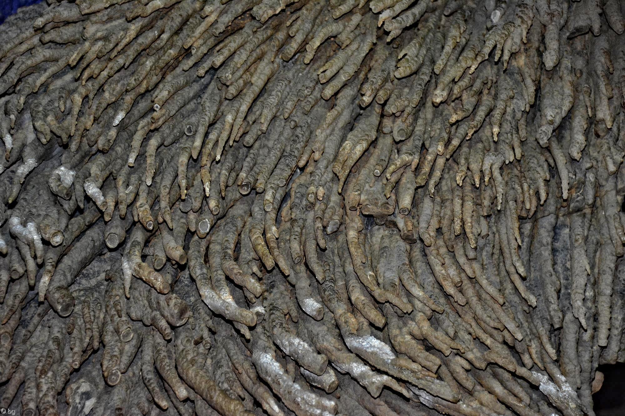 concretions-rocheuses