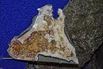 gemmologie-exposition-de-cristaux-en-ligne_2