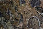 gemmologie-exposition-de-cristaux-en-ligne_7