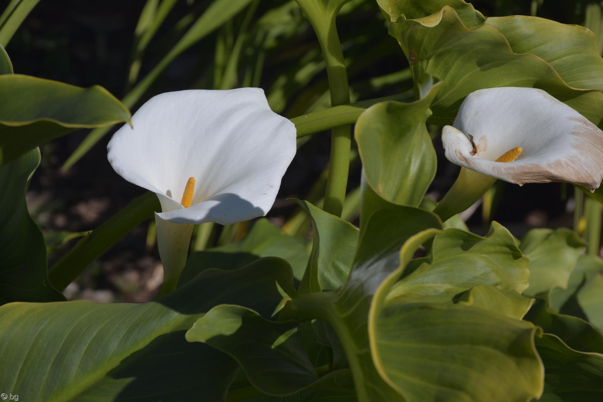 aromes-fleurs-exotiques-fonds-ecran-hd_15
