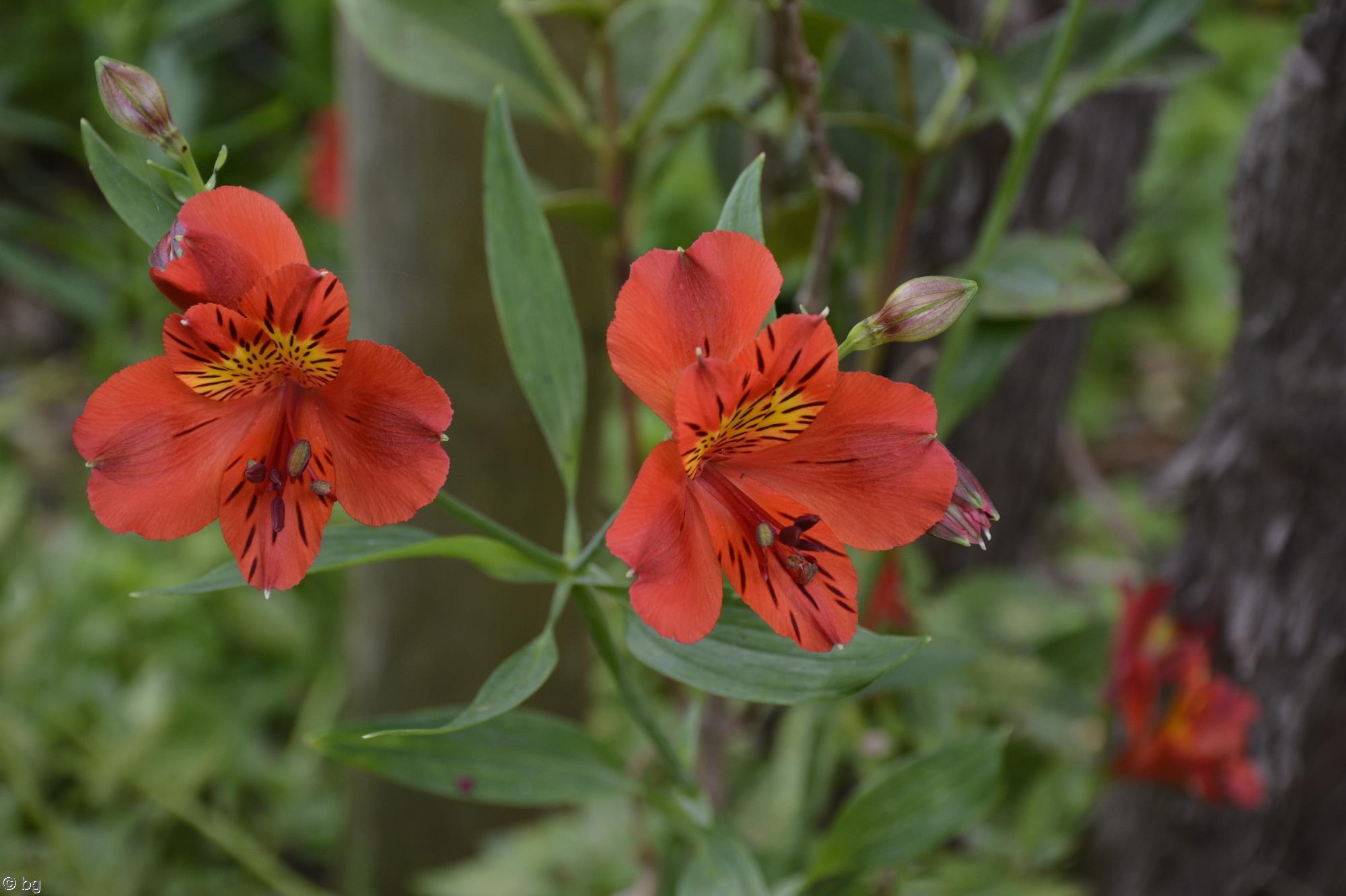 fleurs-exotiques-fonds-ecran-hd_02