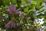 fleurs-exotiques-fonds-ecran-hd_05