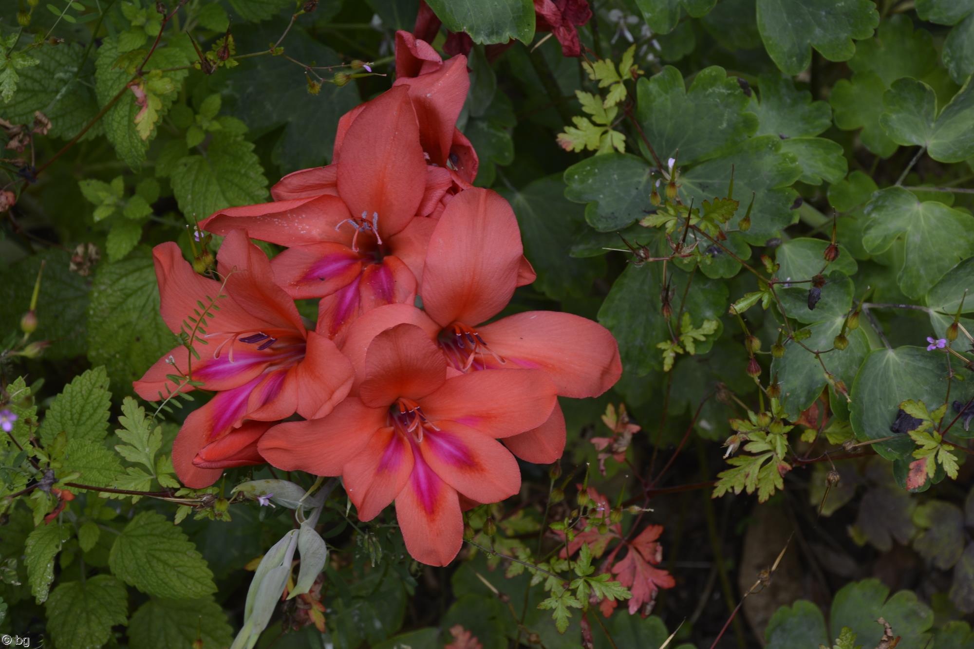fleurs-exotiques-fonds-ecran-hd_06