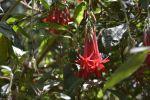 fleurs-exotiques-fonds-ecran-hd_14