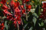 fleurs-exotiques-fonds-ecran-hd_16