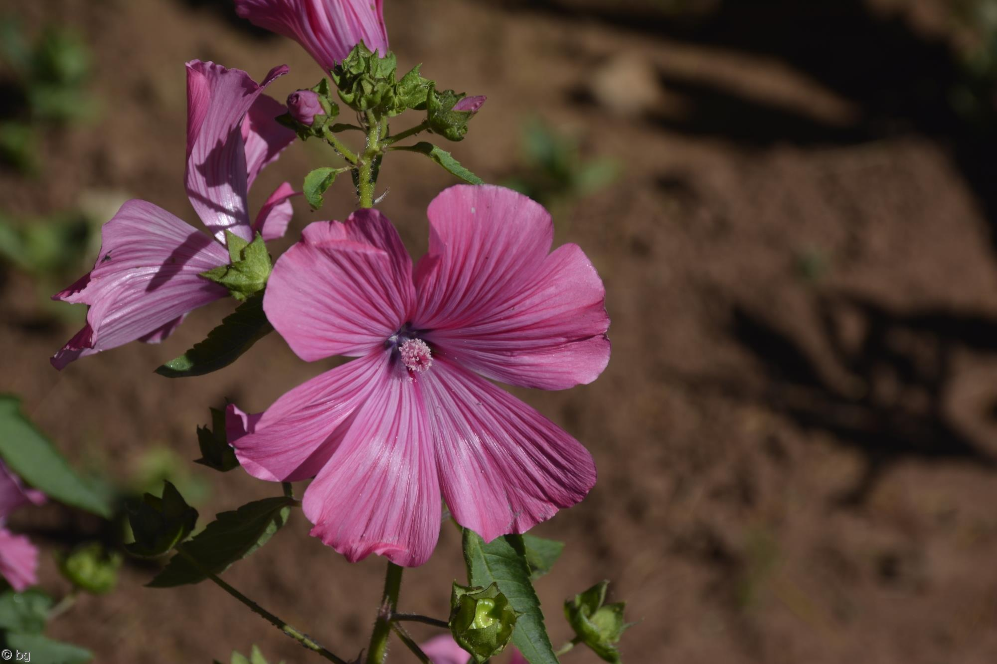 fleurs-exotiques-fonds-ecran-hd_18