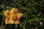 jaune-fleurs-exotiques-fonds-ecran-hd_09