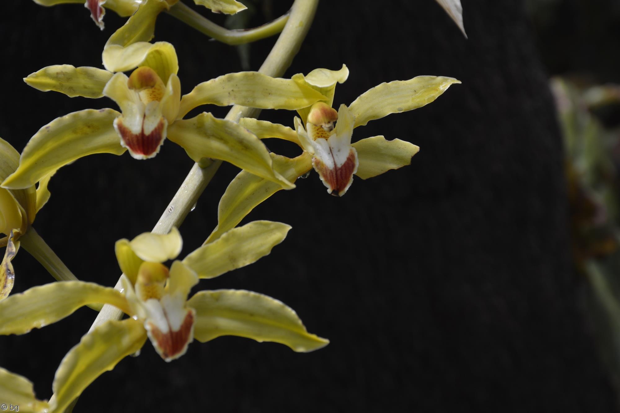 orchidees-fleurs-exotiques-fonds-ecran-hd_12