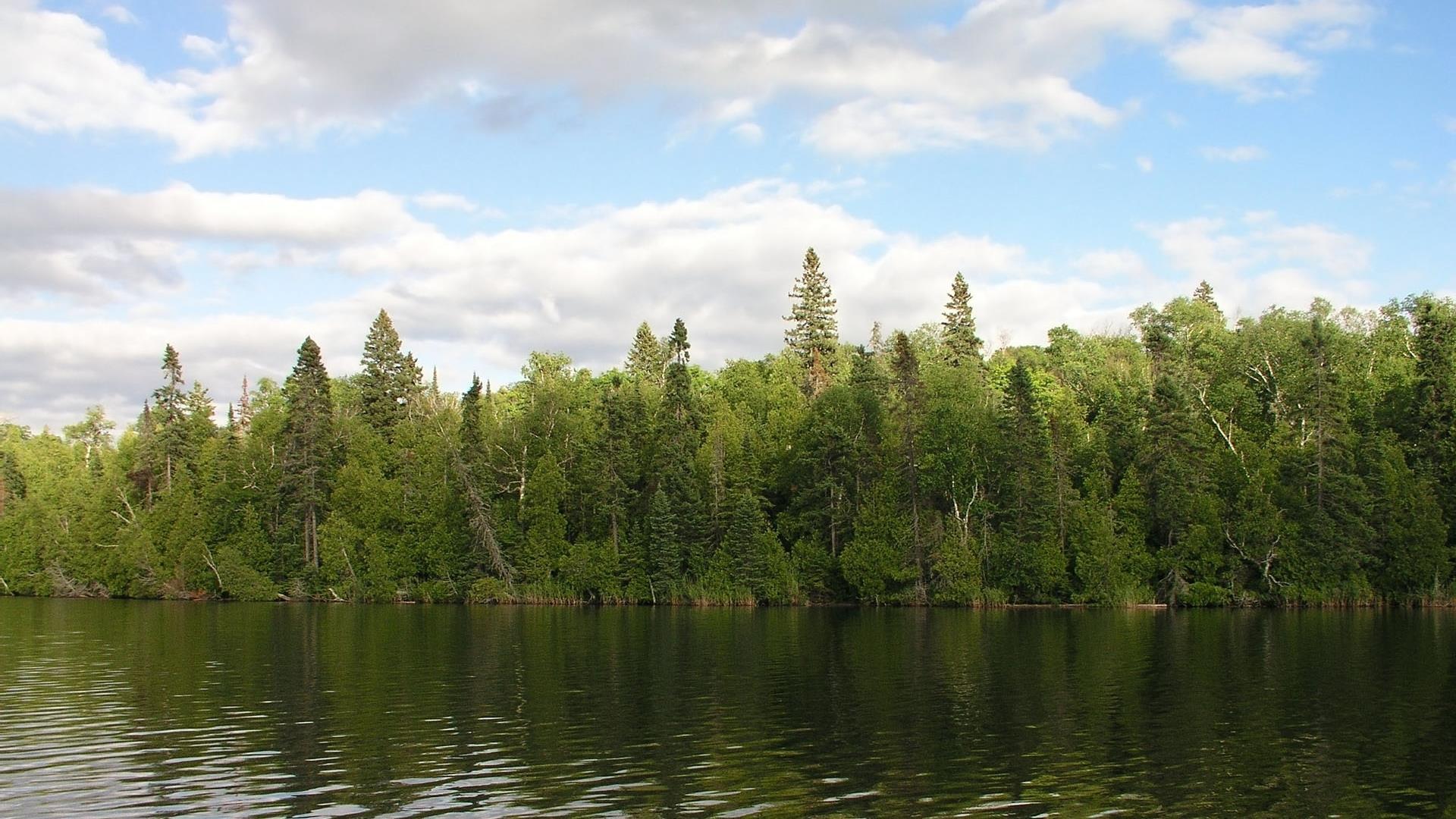 arbres-et-foret_nature-verte_1