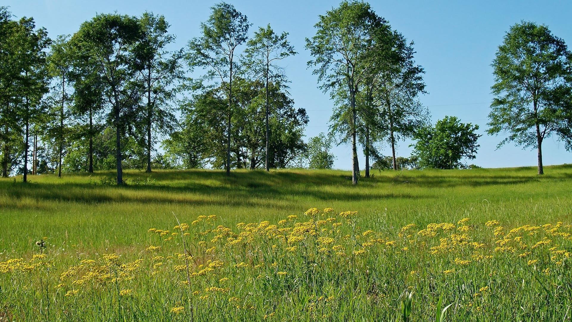arbres-et-foret_nature-verte_2