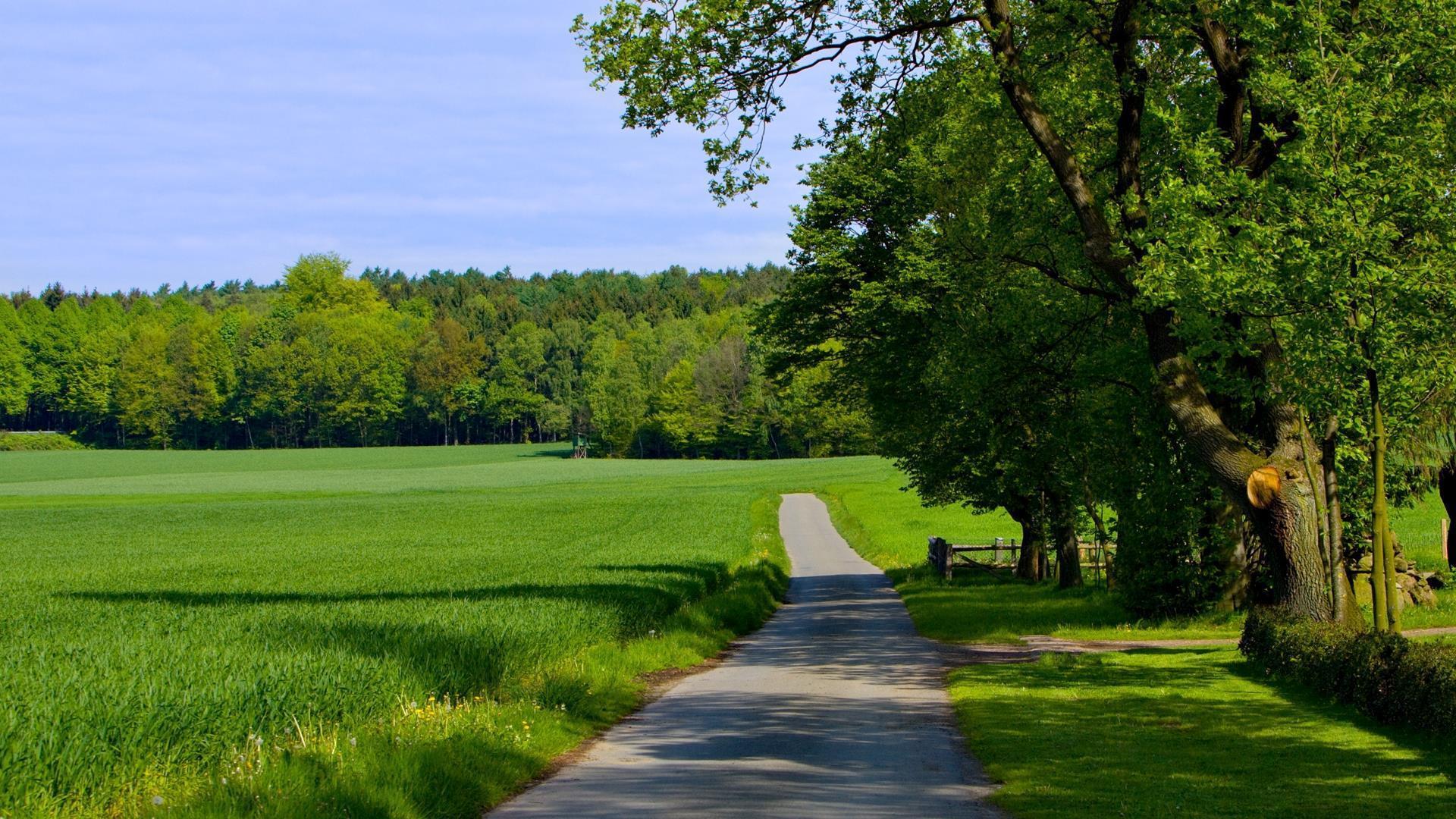 arbres-et-foret_nature-verte_3