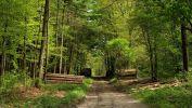 arbres-et-foret_verdure_1