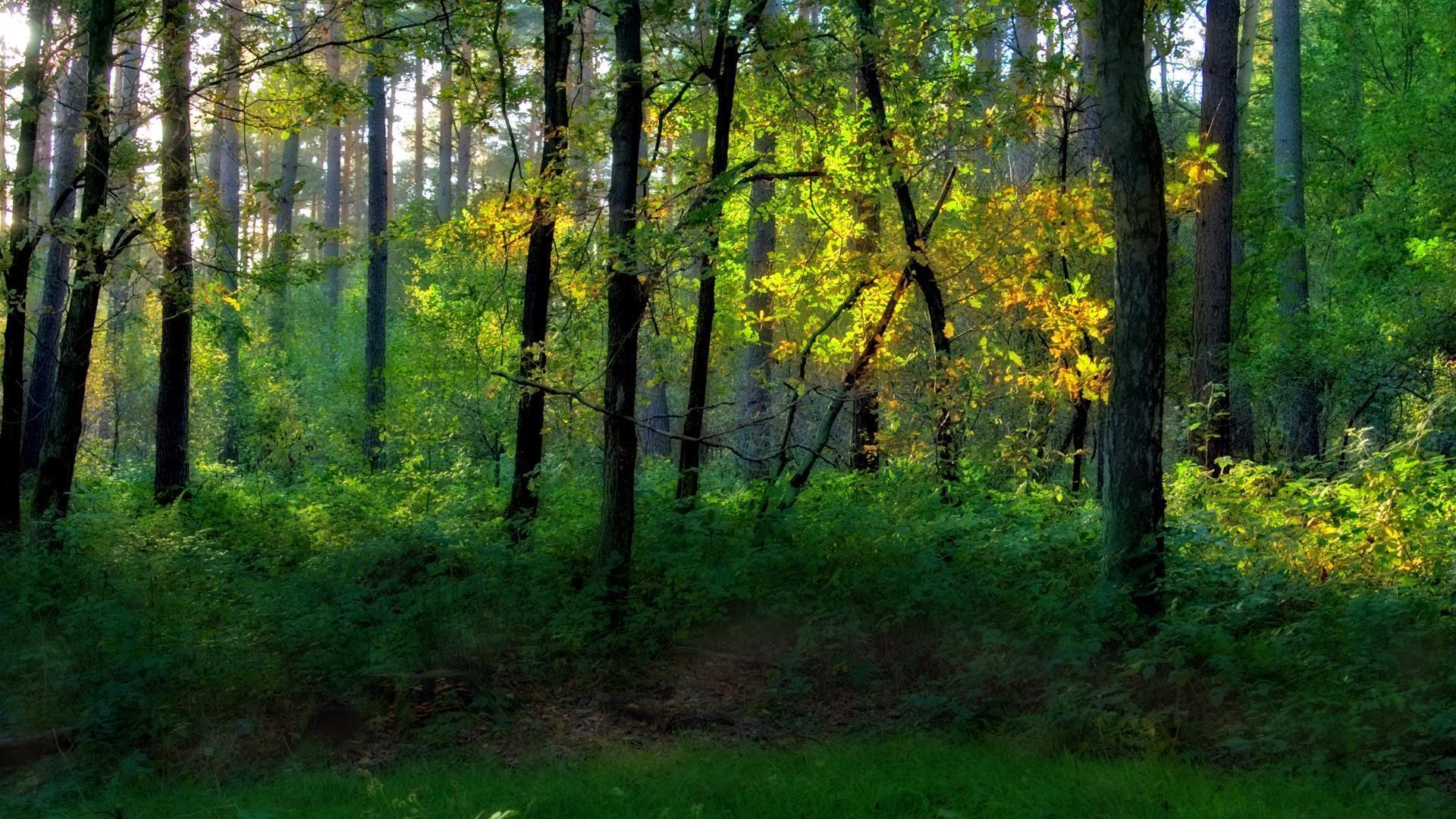 arbres-et-foret_verdure_2