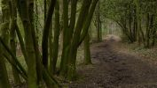 arbres-et-foret_verdure_3