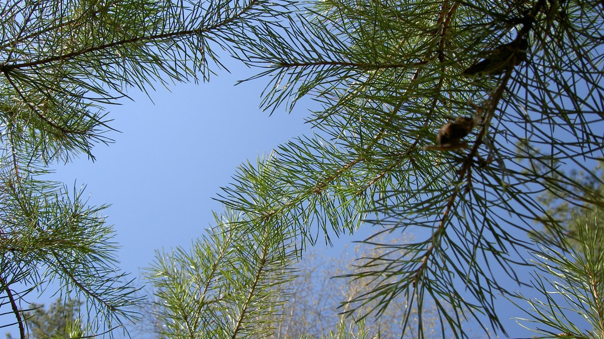 cime-des-arbres