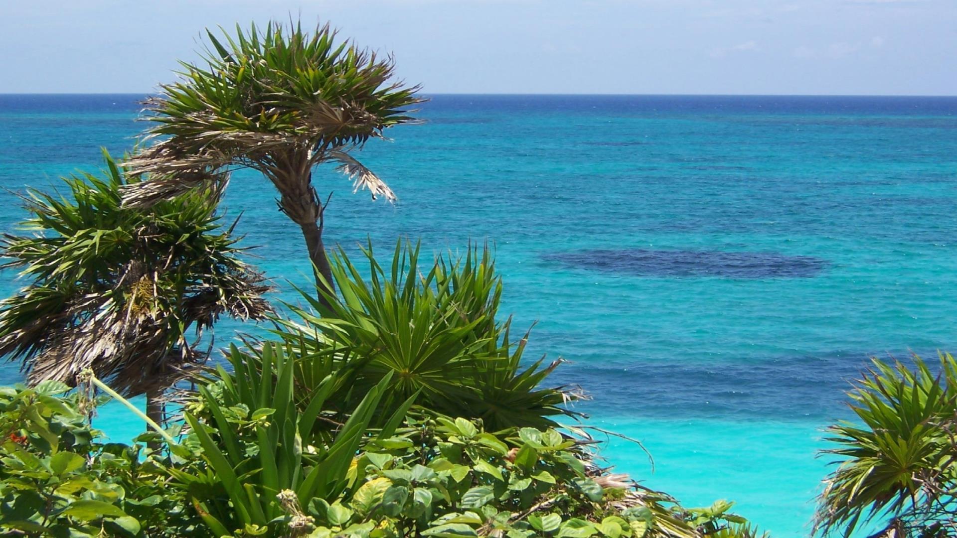 cocotiers-en-bord-de-plage