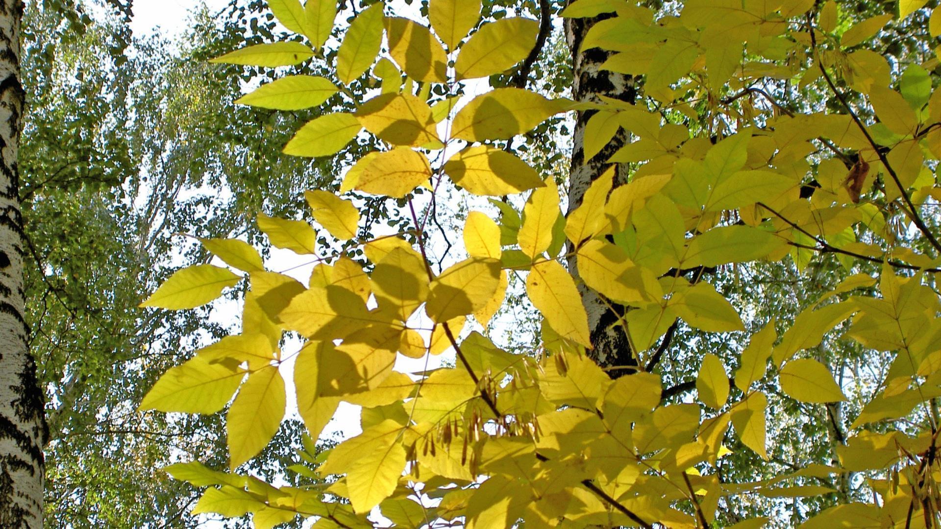 vert-et-jaune_arbres-en-contre-jour_1