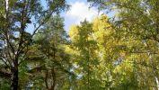 vert-et-jaune_arbres-en-contre-jour_2