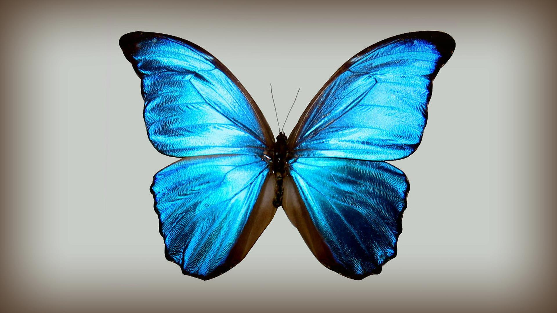 papillon-bleu_creations-originales_11