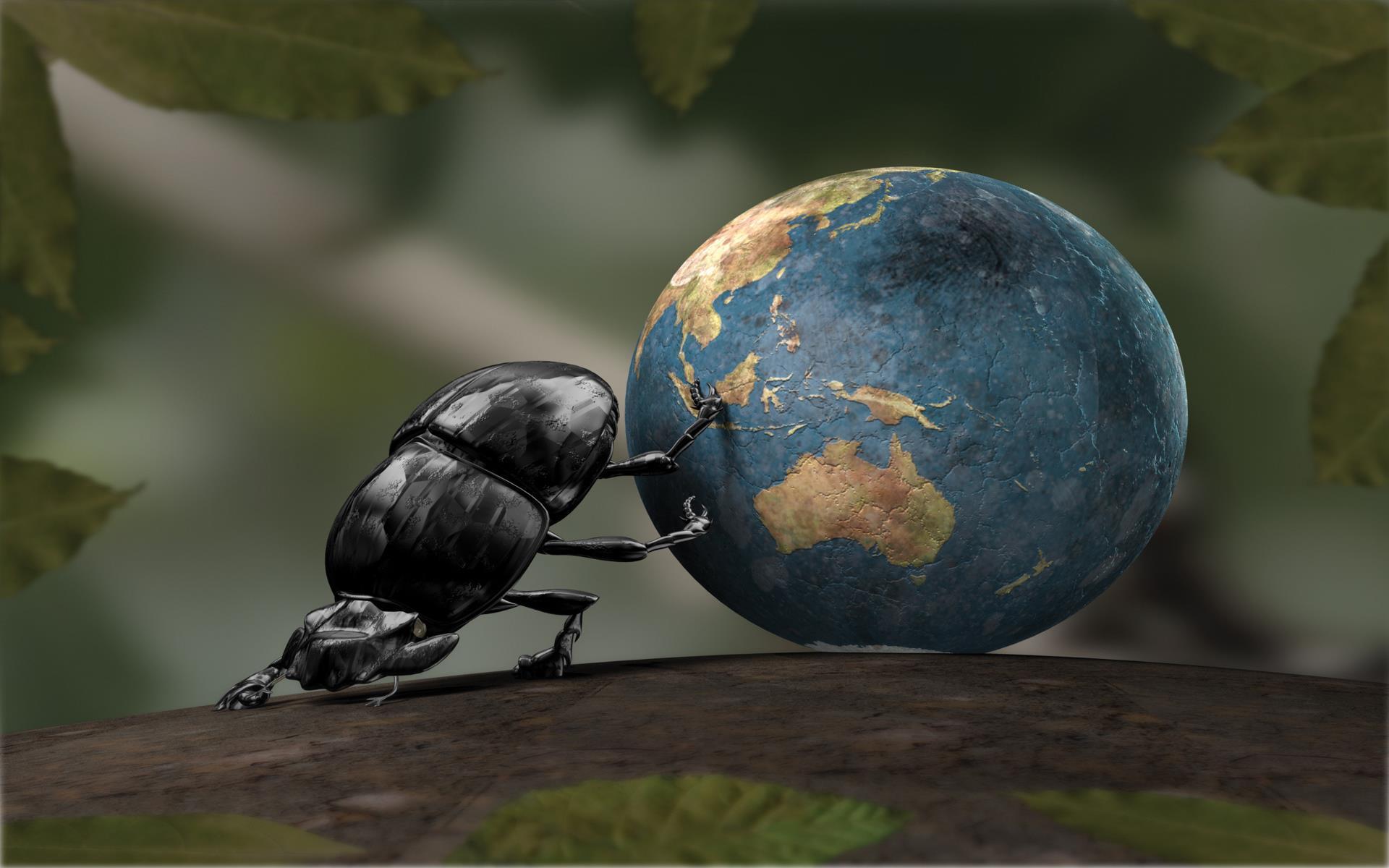 scarabee_art-graphique-et-creations_02