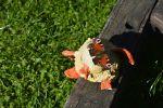 papillon_promenade-dans-la-verdure_14