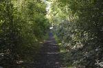 sur-le-terril_promenade-dans-la-verdure_02