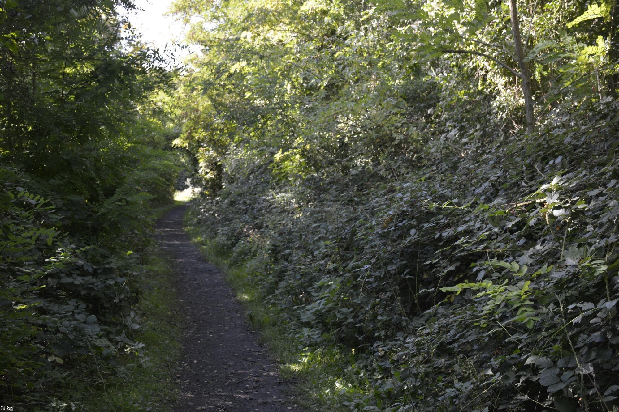 sur-un-terril_promenade-dans-la-verdure_03