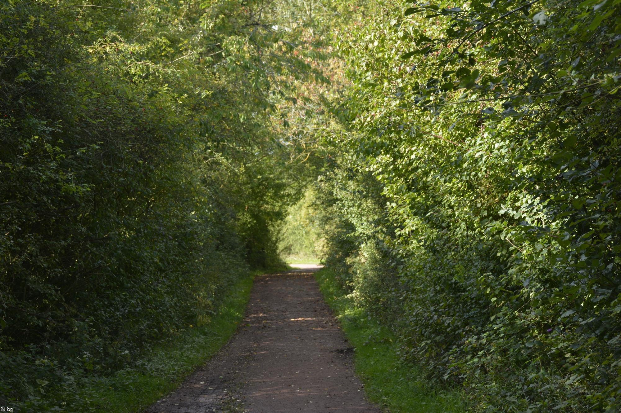 terril-reboise_promenade-dans-la-verdure_05