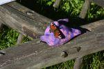 un-papillon_promenade-dans-la-verdure_13